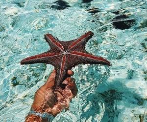 mermaid, sea, and starfish image