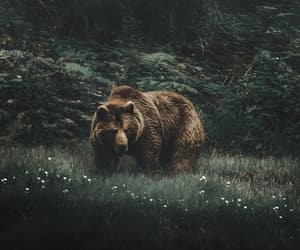 animal, animals, and bear image