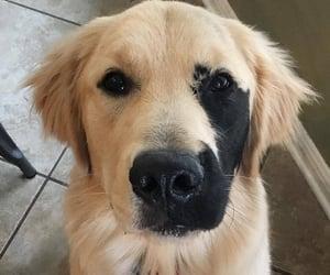 dog, doggies, and cutedog image