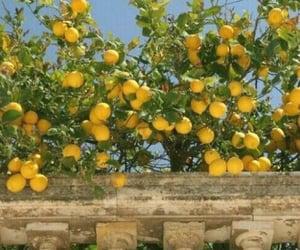 lemon, yellow, and aesthetic image