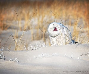animals, owl, and snow image