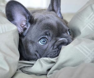 dog, bed, and inspiration image