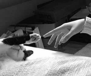 cat, animal, and hand image