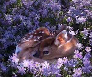flores, inspiracion, and naturaleza image