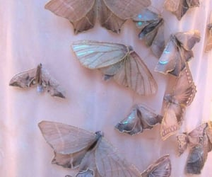 aesthetic, pastel color, and butterfly image