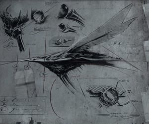 ink, research, and insect image