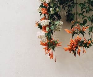 flowers, orange, and white image