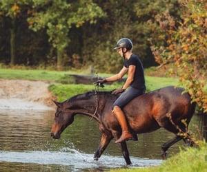 bareback, horse, and english image