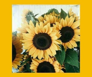 sunflowers, wallpaper, and yellow image