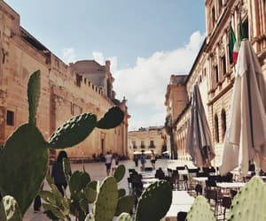cacti, cactus, and italy image