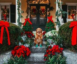 holiday, christmas, and dog image