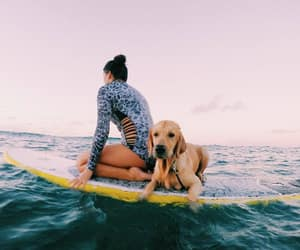 summer, dog, and surf image