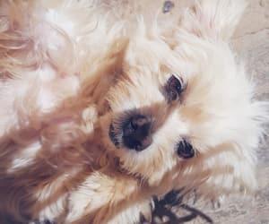 adorable, animals, and brightness image