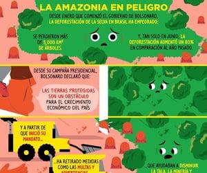 amazonia, criminal, and brasil image