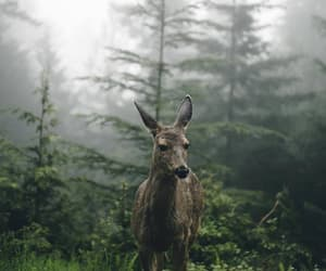 animal, nature, and deer image