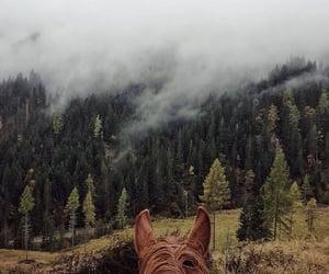 horse and landscape image