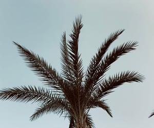 nature, palm, and sea image