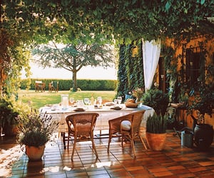 garden, plants, and summer image