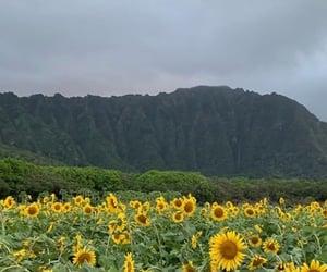 flowers, green, and hawaii image