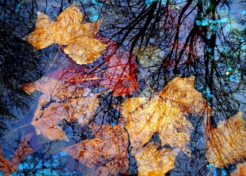 autumn and reflection image