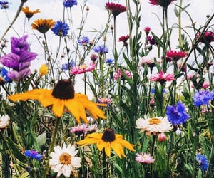daisy, field, and flowers image