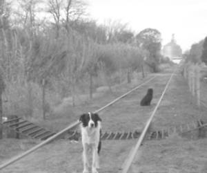 black and white, dog, and train image