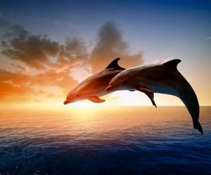 couple, dolphins, and happiness image