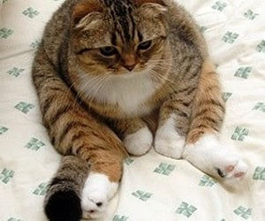 cat, meme, and react image
