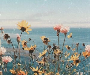 background, beach, and flowers image