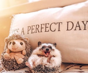 adorable, sweet, and animals image