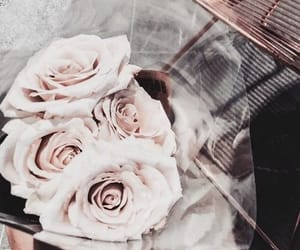 flowers, rose, and theme image