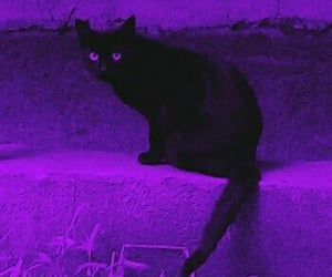 purple, cat, and aesthetic image
