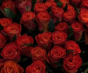 beautiful, lifestyle, and orange roses image