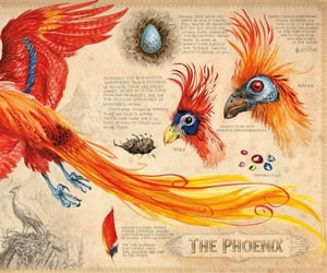 harry potter, bird, and book image