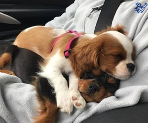 puppy, animals, and cute image