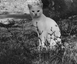 animal, black and white, and cat image