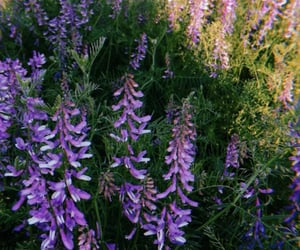 field, flowers, and foxgloves image