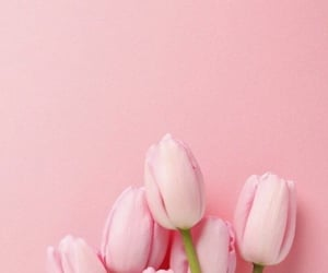 aesthetic, floral, and flowers image