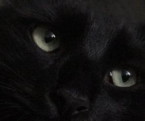 black, black cat, and blue image
