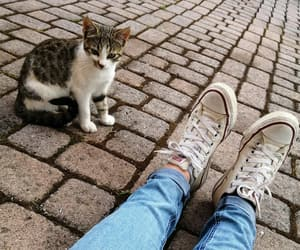 allstar, cat, and sitting image