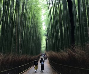 bamboo, japan, and forest image