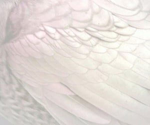 wings, aesthetic, and feather image