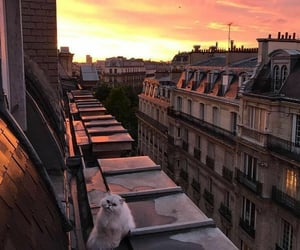 cat, sunset, and aesthetic image
