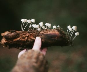 earthy, forest, and mushrooms image