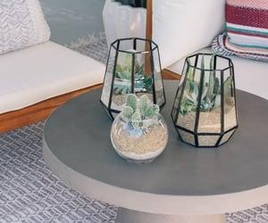 diy, succulents, and terrarium image