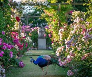birds, flowers, and garden image