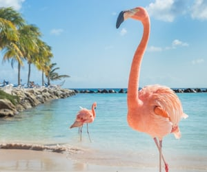beach and flamingo image