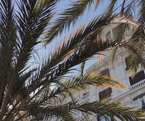 palm tree, sea, and spain image