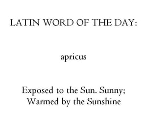 latin and quotes image