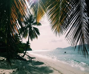 beach, palms, and summer image
